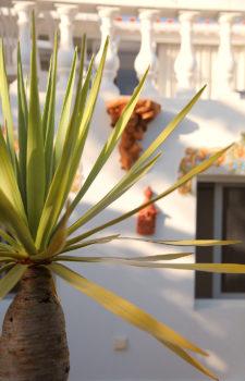 Palme vor dem Ferienhaus