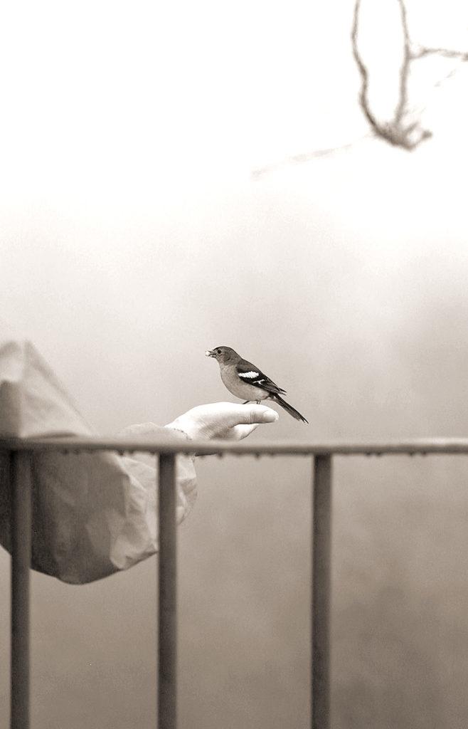 vogel auf hand bei einer wanderung auf madeira schwarz-weisses Foto